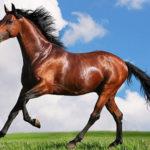 Seguro para la salud de tu caballo